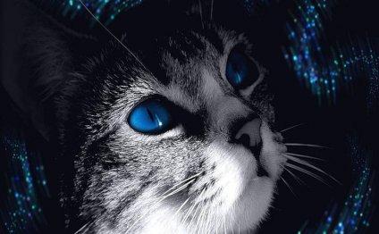 30 шикарных фото голубоглазых
