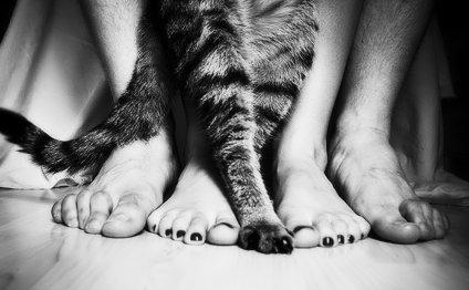 Болезни кошек, передающиеся