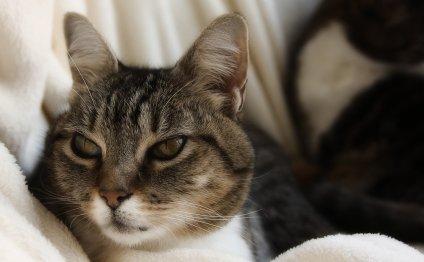 Болезни кошек: симптомы и