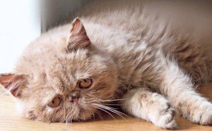 Болезни старых кошек