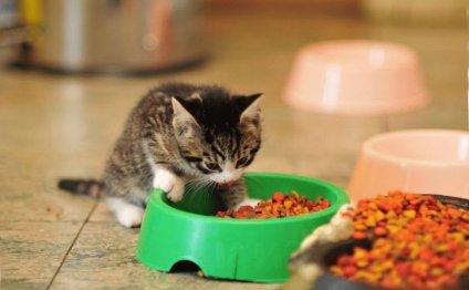 Чем кормить котенка 1 месяц