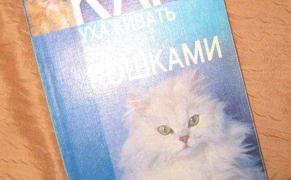 Как ухаживать за кошками