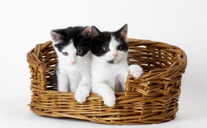 Как ухаживать за котятами