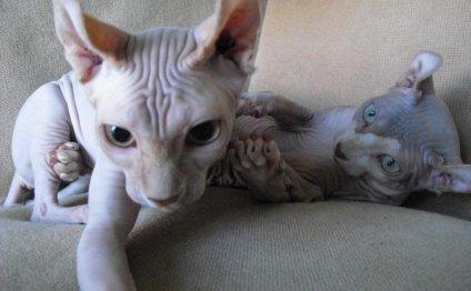 Кошка - эльф