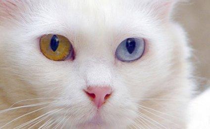 Породы кошек. Мир животных