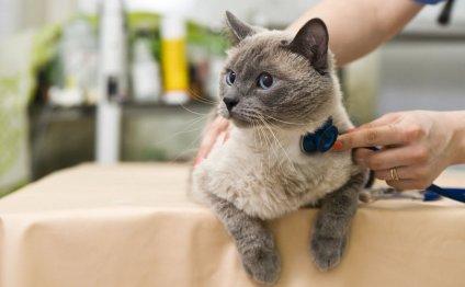 Лечение кошек у врача