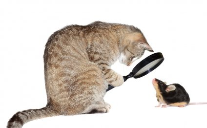 Лечение глаз у животных