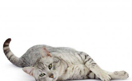 Породы кошек: каталог пород