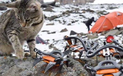 Кошка-путешественница из
