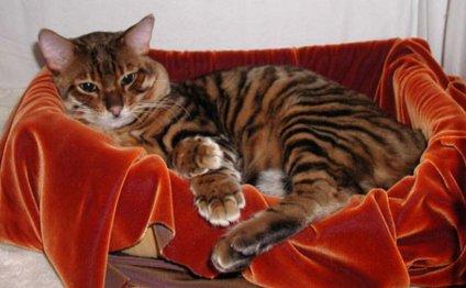 Самая красивая кошка в мире