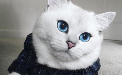 Самая красивая в мире кошка