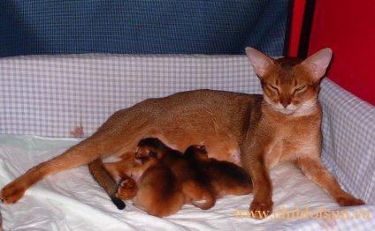 Самые дорогие котята! Помет F