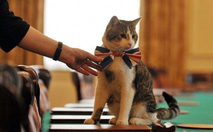Самые известные кошки: звезды