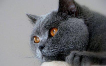 Кошки были одомашнены