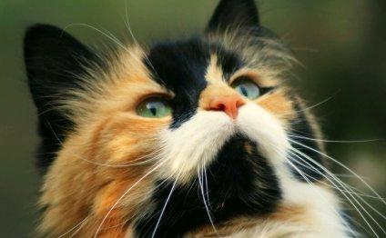 Самые Красивые Породы Кошек В