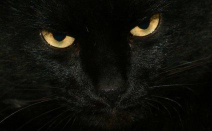 Счастливые черные кошки (42