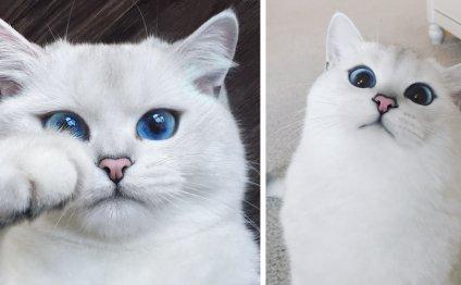 У этой кошки - самые красивые