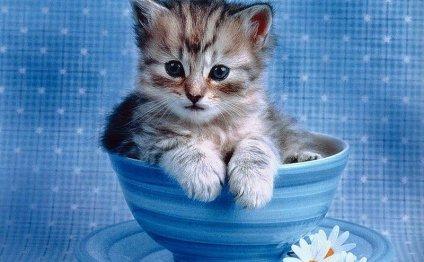 Советы по уходу за котенком. 1