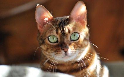 Развитию болезней кошек